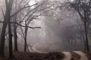 photo shows a creepy foggy road lined with trees